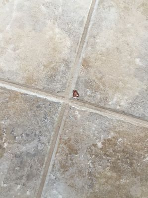 Tile & Grout Repair in Jacksonville, FL (1)