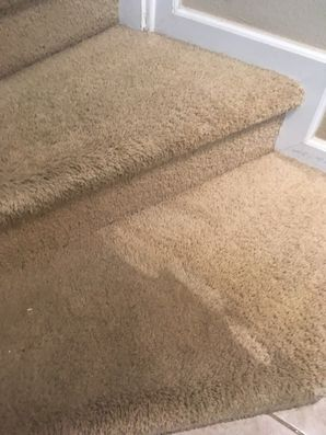Carpet Cleaning in Jacksonville, FL (2)