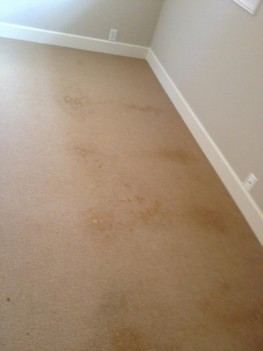 Carpet Stain Removal in Jacksonville, FL